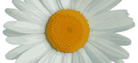 logo-big-flower-twitter-square